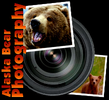 Alaska Bear Viewing Photography