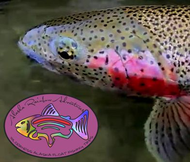 Rainbow Trout Fishinng Alaska Kanektok River